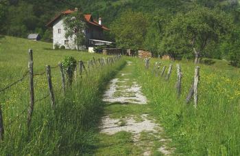 Wild Village