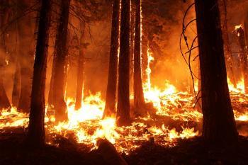 Wildfire in the Jungle