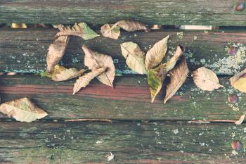 Wilted Leaves on Brown Wooden Surface