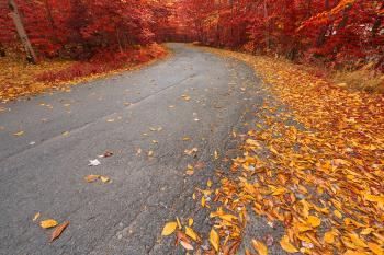 Winding Autumn Forest Road - Ruby Gold HDR