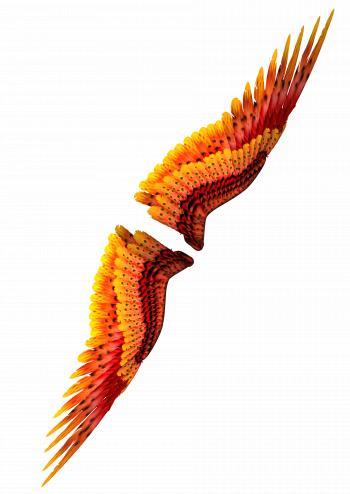 Wings 3