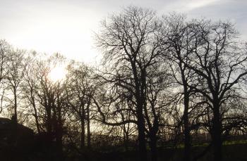 Winter At Hillsborough Park