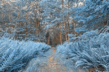 Winter Fern Trail - HDR