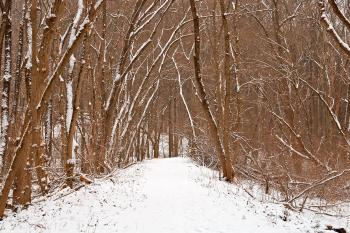 Winter Forest Tipi Trail