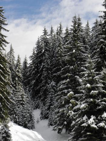 Winter Wonderland in Central Rhodopes