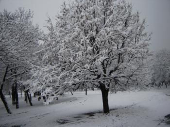 Winter`s tale
