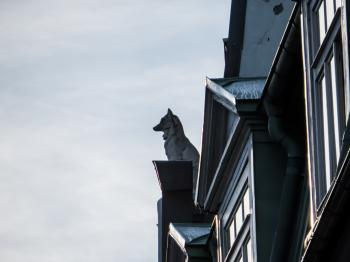 Wolf watching over the city