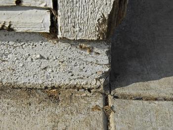 Wood, Paint, & Concrete