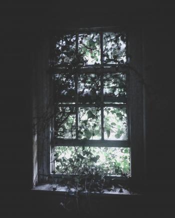Wooden Window Pane With Vines