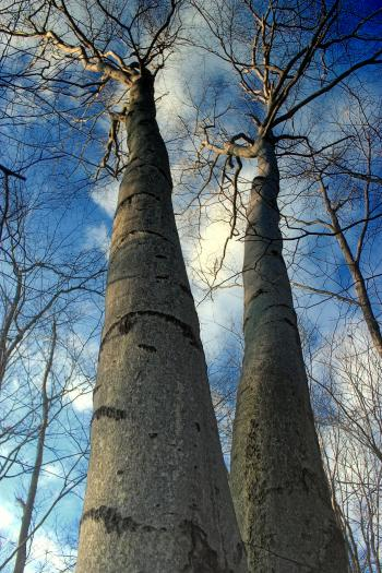 Woods Walk (1)