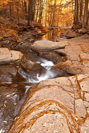 Worlds End Forest Stream - Gold Rapture