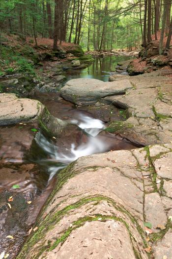 Worlds End Forest Stream