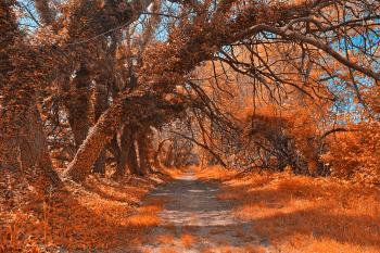 Wye Island Amber Trail - HDR