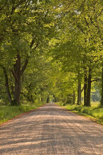 Wye Island Canopy Road - HDR