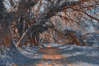 Wye Island Sapphire Trail - HDR