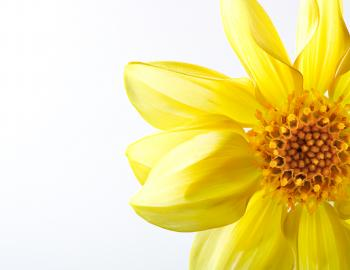 Yellow Beautiful Flower