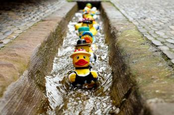 Yellow Duckies in Line on a Concrete Floor