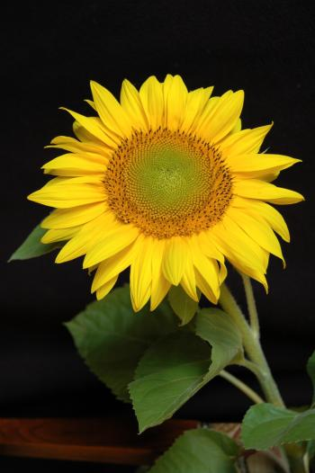 Yellow Flower Plant in Macro Shot
