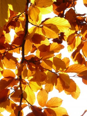 Yellow Leaf Illustration