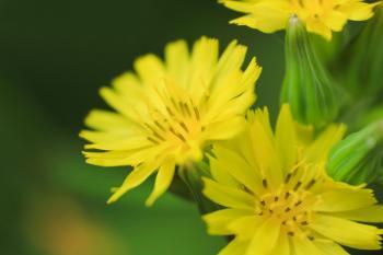 Yellow Petal Flower