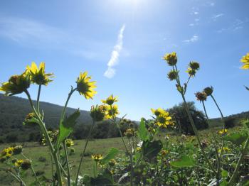 Yellow Petaled Flowers Under the Blue Sky