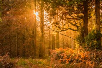 Yellow Sunset Rays Passing Through the Trees