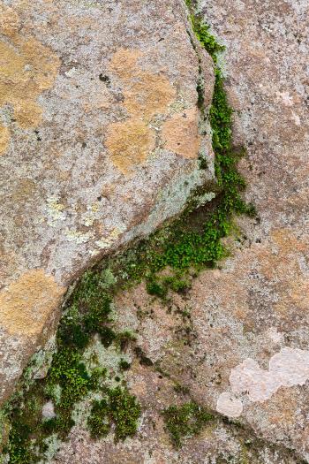 Yin Yang Moss Stone - HDR