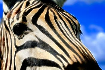 Zebra Profile Abstract