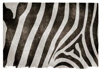 Zebra Stripes Grunge Paper