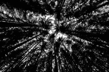 Zenn's Black Wood
