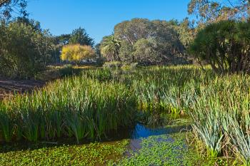 Zoo Marsh Scenery - HDR