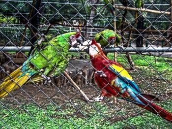 Zoo parrots