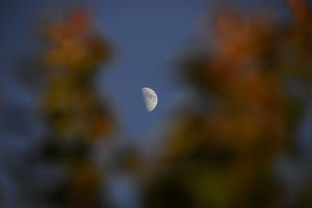 5 PM Moon through the Leaves of a Tree