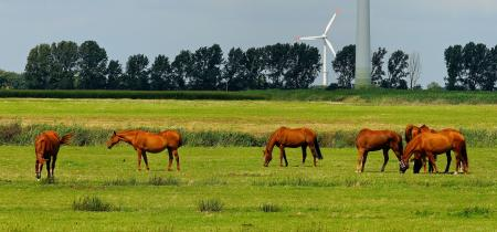 6 Horses on Green Field during Daytime
