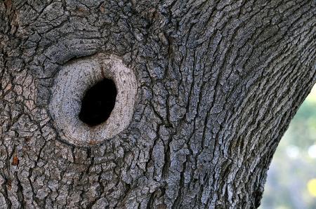 A Knothole