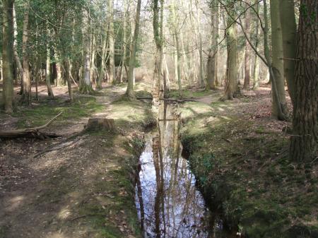 A stream through the woods
