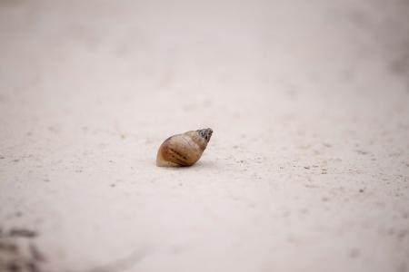 Single Abandoned shell