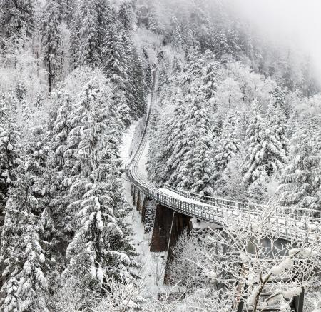Aerial Photography of Train Rail Between Winter Trees