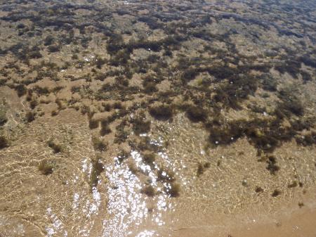 Algae in a Clear Water