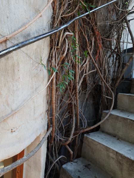 Ancient staircase with plants