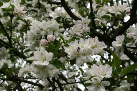 Unusual tree bloom