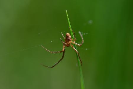 Araignées, insectes et fleurs de la forêt de Moulière (La Croix Parc)