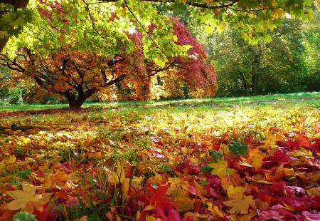English autumn garden