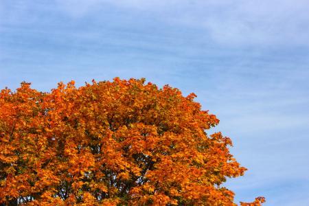 Autumn Leaves in Ontario