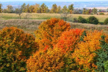 Autumn leaves in rural Ontario