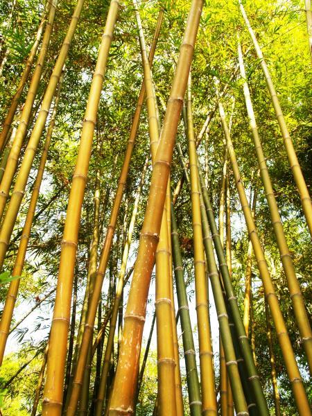 Bamboo Tree during Daytime