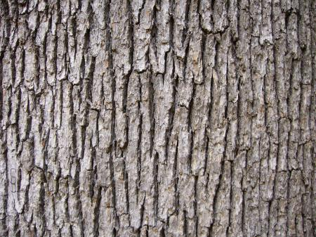 Wood Trunk Texture