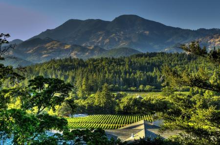 Beautiful Calistoga Vineyard