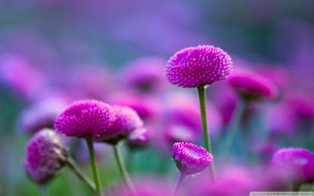 Beautiful natural flower