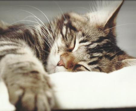 Beautiful sleeping cat